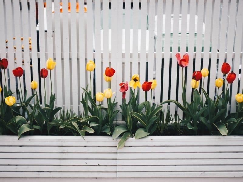 Hoa trong thiết kế cảnh quan